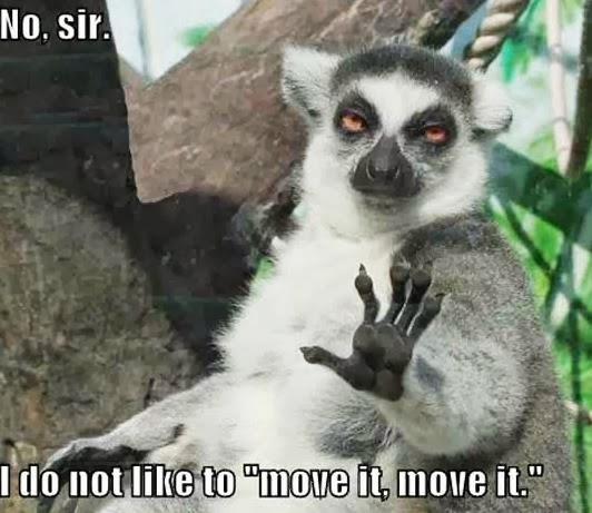 No Sir I Don't Like To Move It Move It